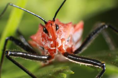 Bug macro by RichardjJones