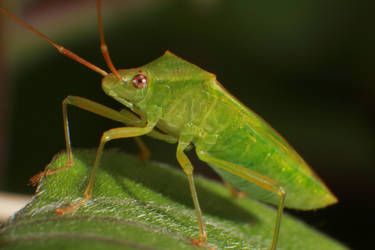 Bug macro2 by RichardjJones