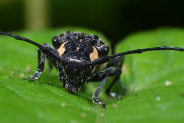 Macro-Beetle05 by RichardjJones