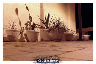 Concrete Succulents by ChrisMarcum