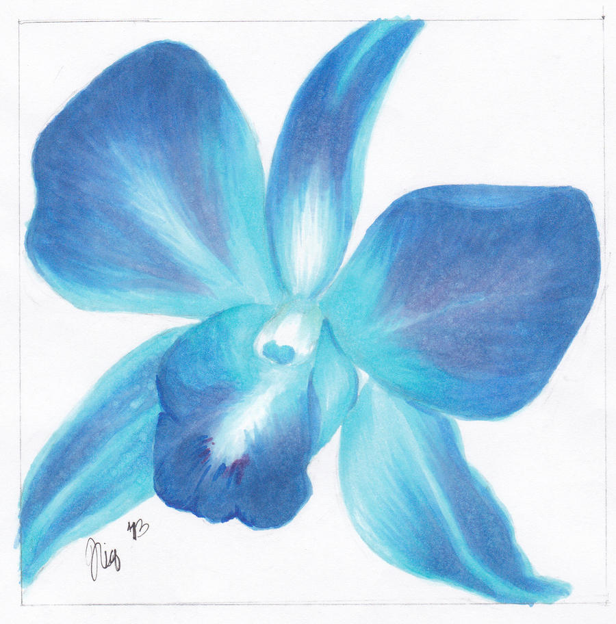Blue Orchid Drawing