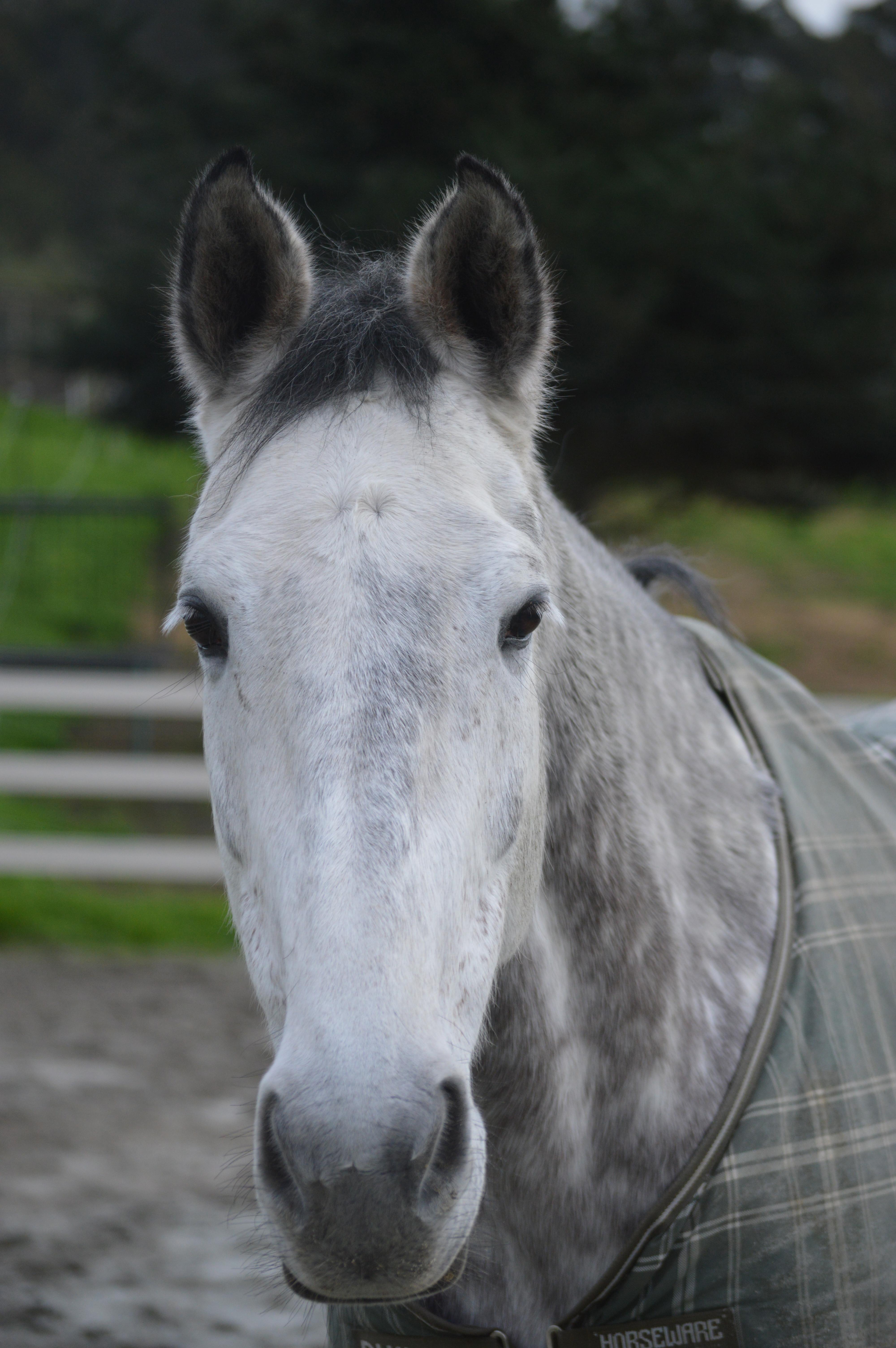 fluffy horses - photo #26