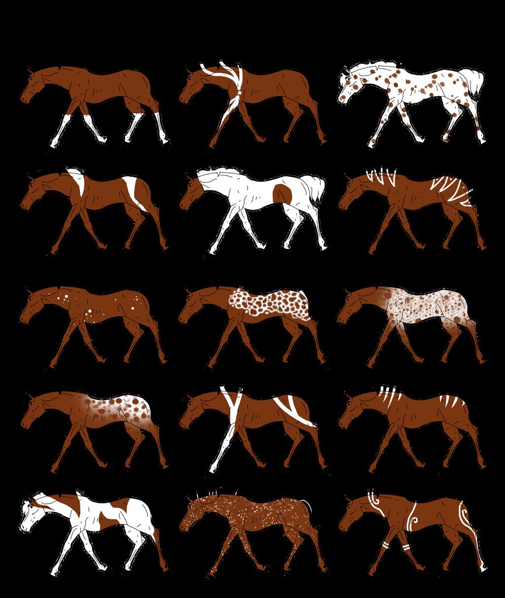 Pandori Aura Equine - Markings Chart by carlmoon on DeviantArt