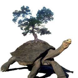 Gaia Turtle