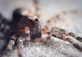 Arachnida by MizarII