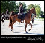 -Horse 4- :stock: