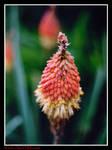 35mm Flower Pt 2