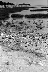 Pegwell Bay - Fomapan 100