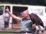 On The Hunt - Bald Eagle