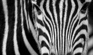 Stripes. by Evey-Eyes