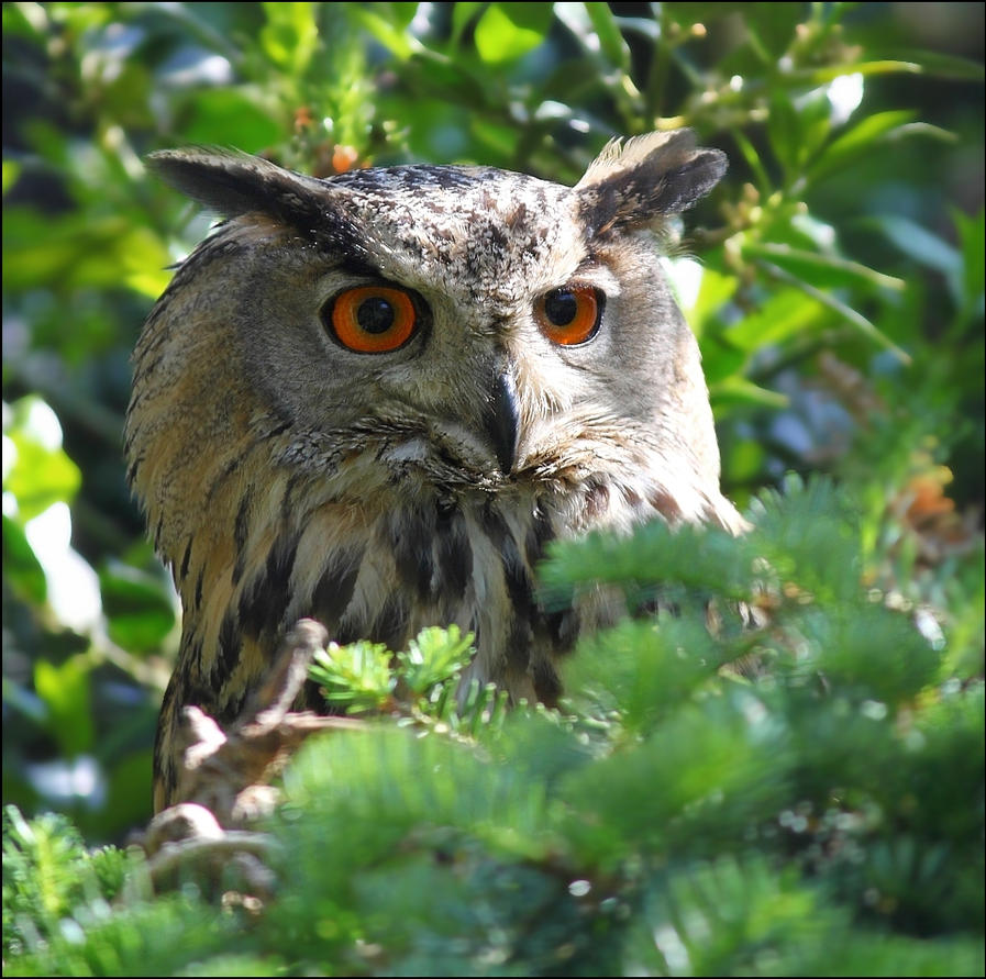 Eurasian Eagle-owl. by Evey-Eyes