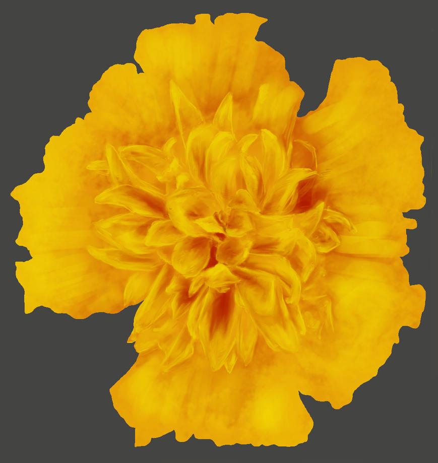 Flower Exercise 6 by Kizzy-i-Keinstein