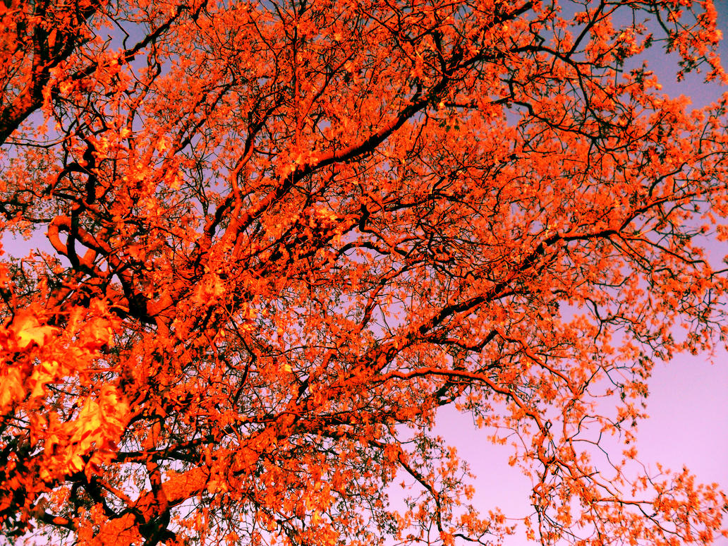 Feuerbaum by xlredeyelx