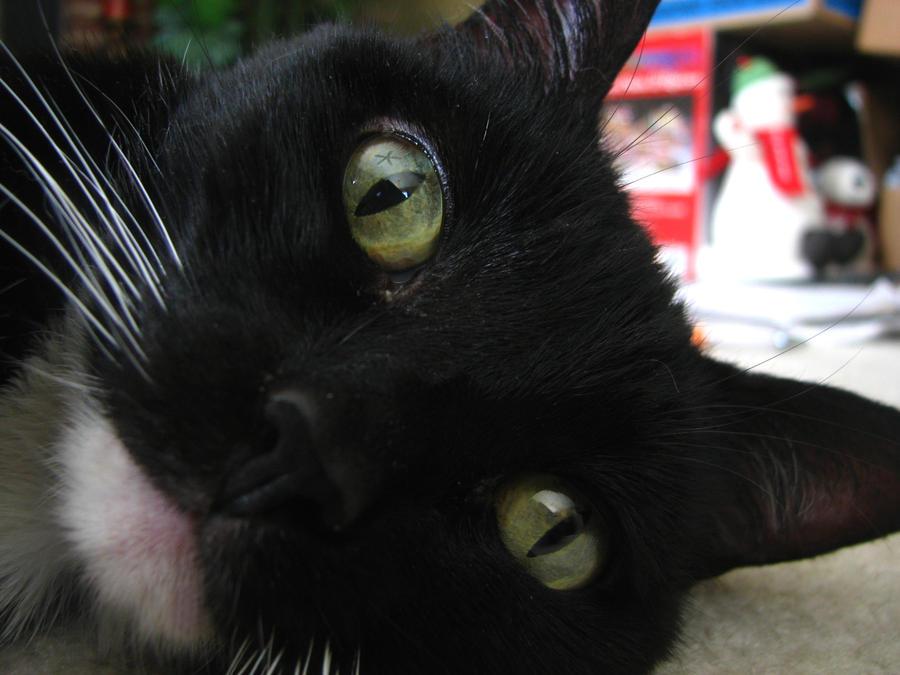 Cat 07 by bleedingxpaint-stock