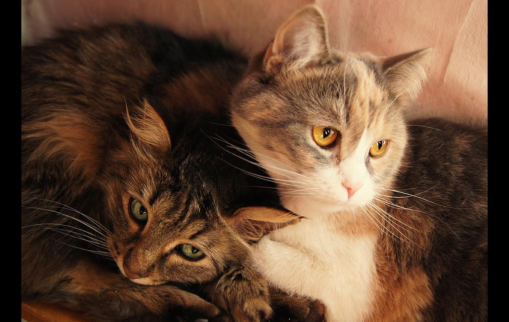 Cats by Biosintes