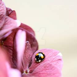 Lieveheersbeestje II