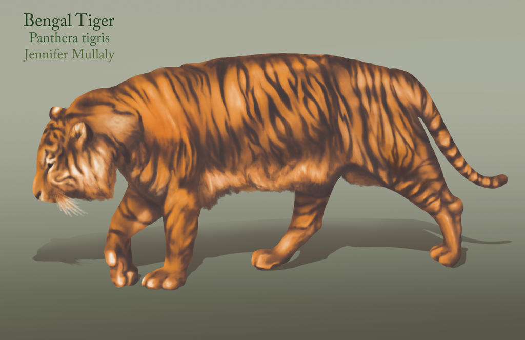 Tiger Render by peanutbutterjenny on DeviantArt
