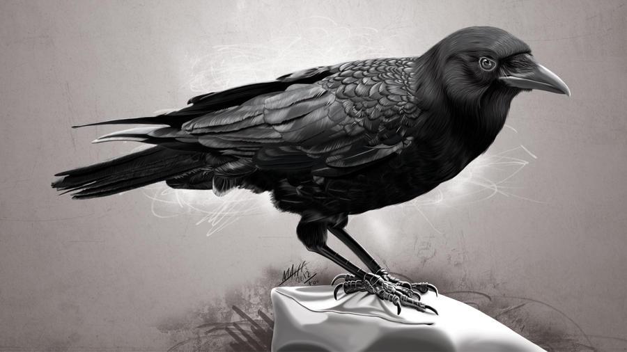 Black Crow by FouadHoussin