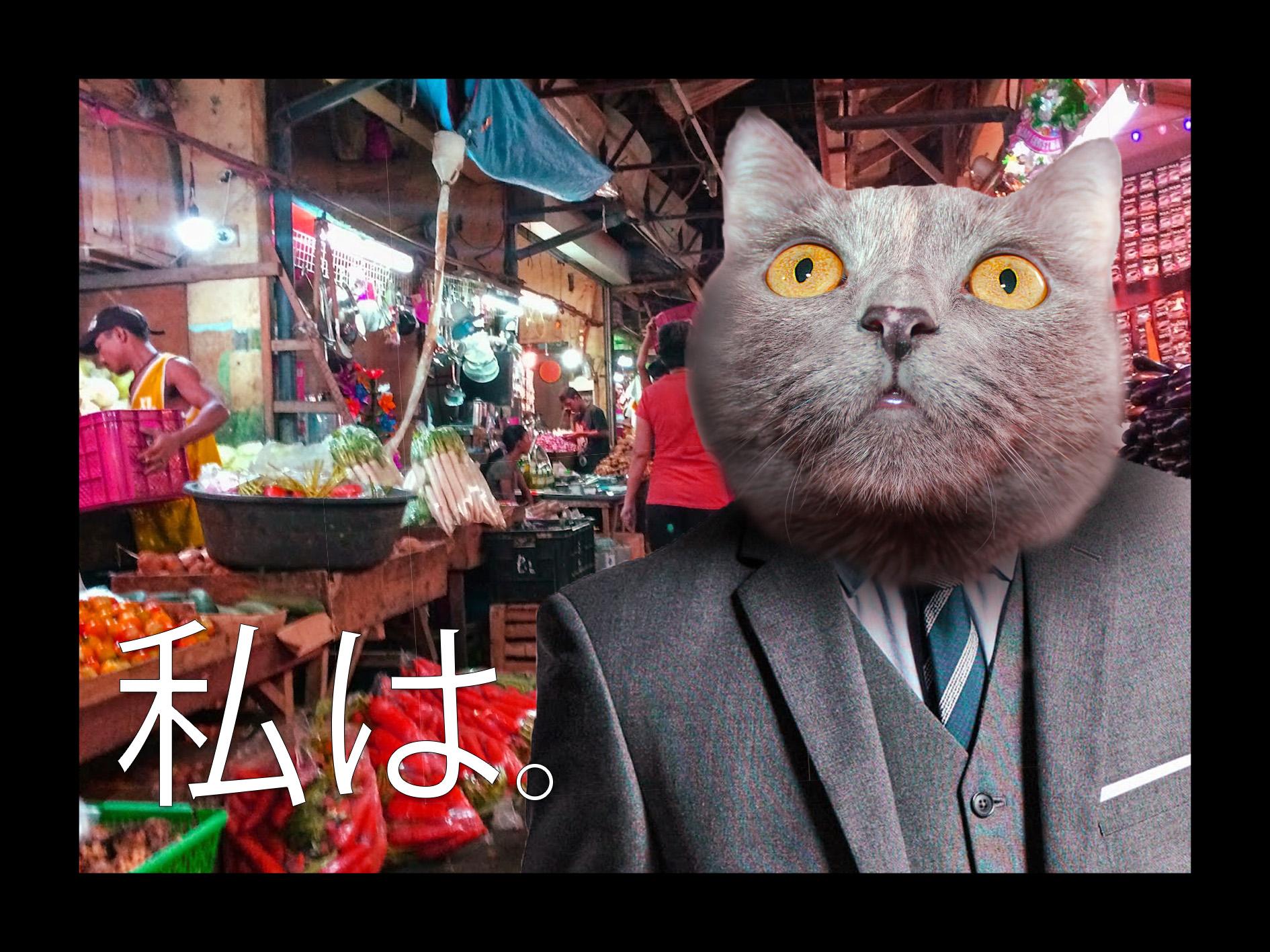Cat in the market by DenAltVega