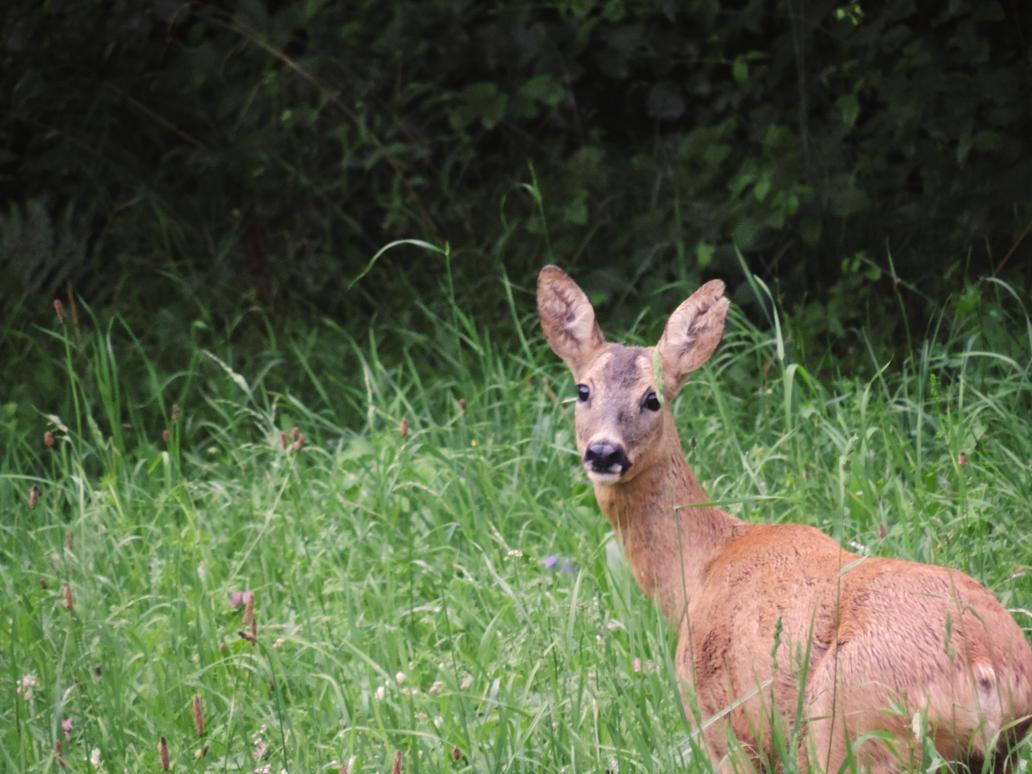 Bambi by Starblas