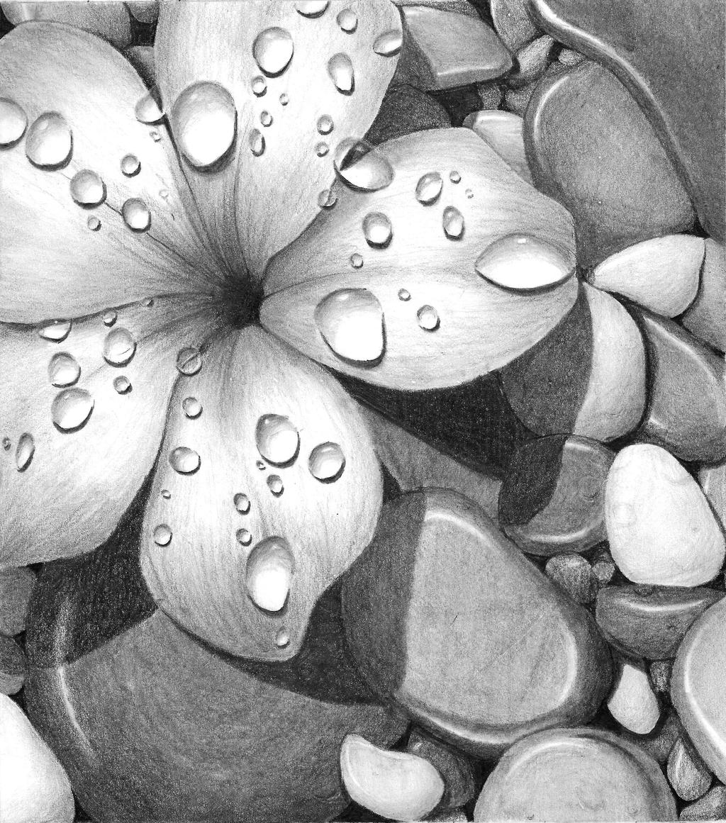 Flower on rocks