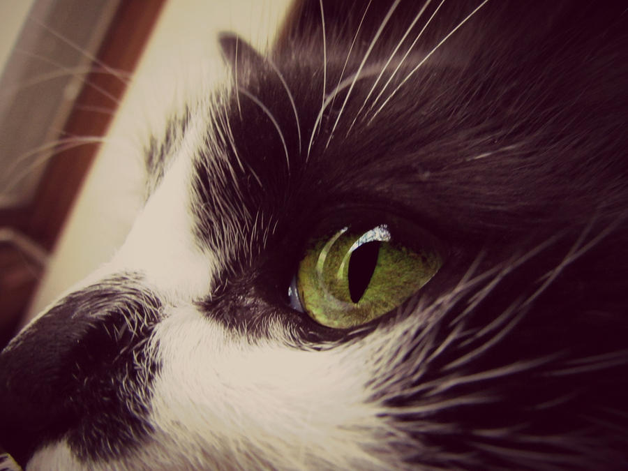 Green Eyes by Theanimalparade
