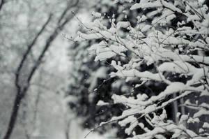 Snowfall by Theanimalparade