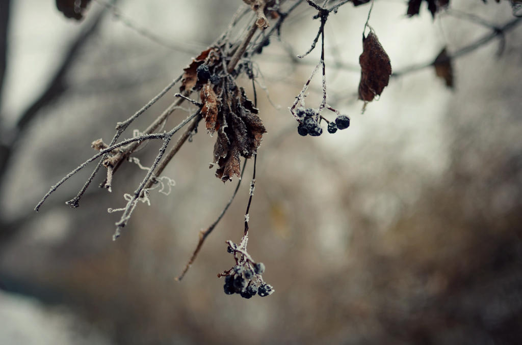 The Wilted Beauty of Winter by Theanimalparade