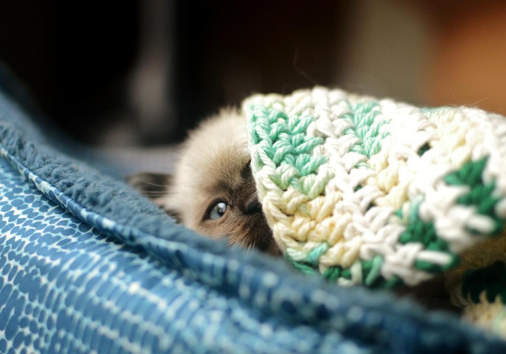 Peek-a-Boo! by Theanimalparade
