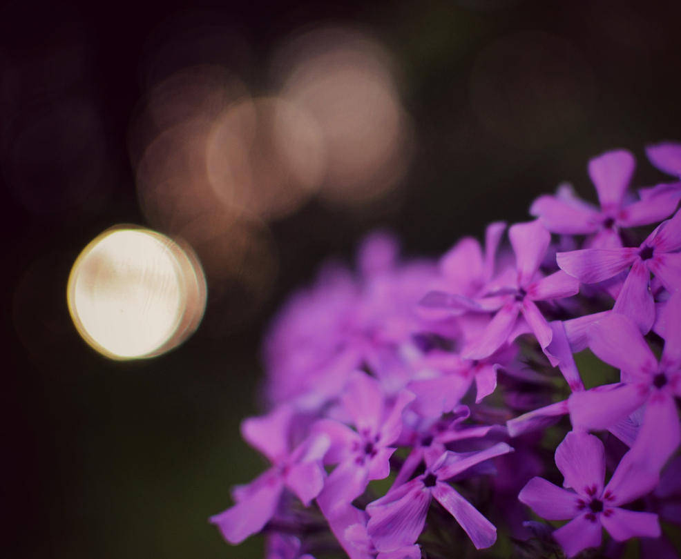 Wild Purple Phlox by Theanimalparade