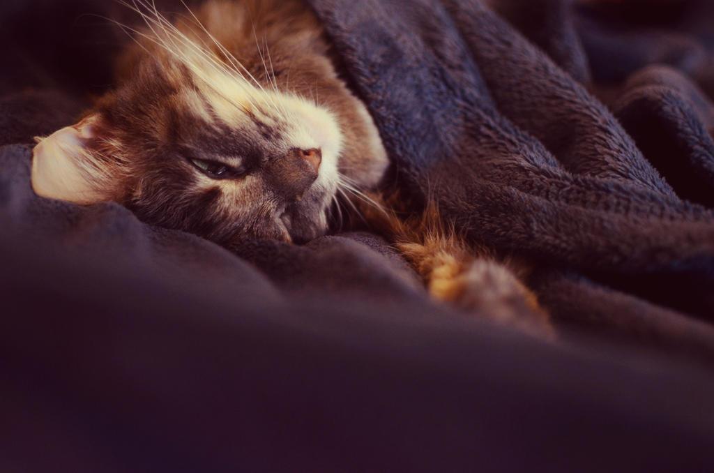 Just Sleep by Theanimalparade