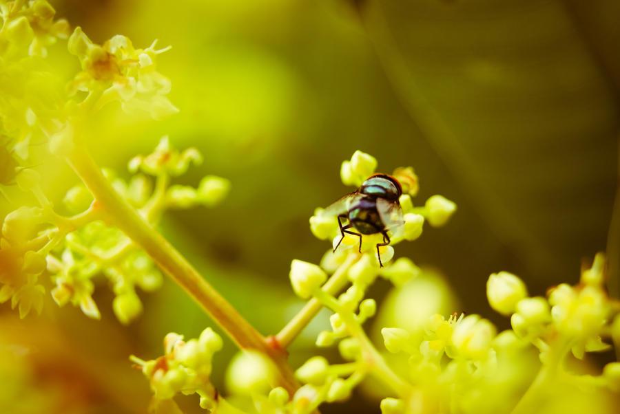 It's a Fly by stvzz