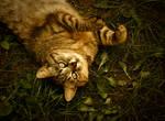 kitty the charmer