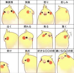 bird emotion