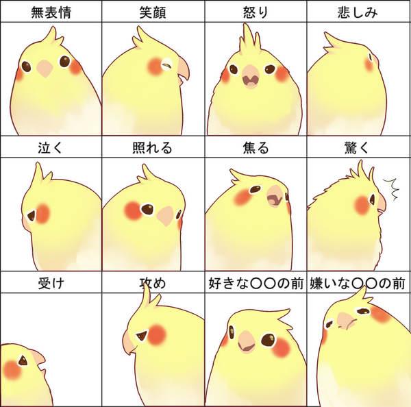 bird emotion