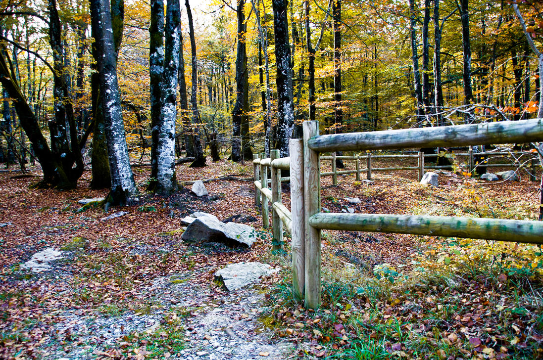 forest corridor with fence - photo #4