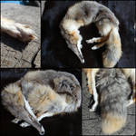 LS Kit Fox for Sale
