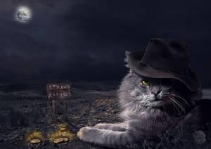 Cat Bazilio