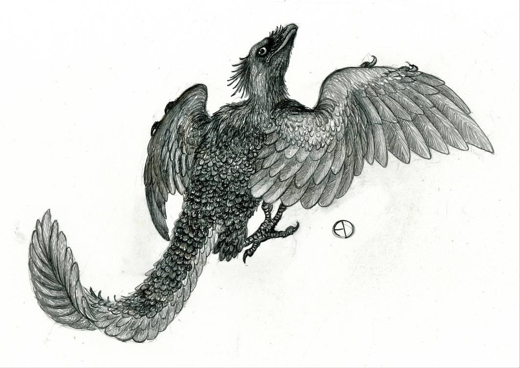 Archaeopteryx by SaurArch on DeviantArt