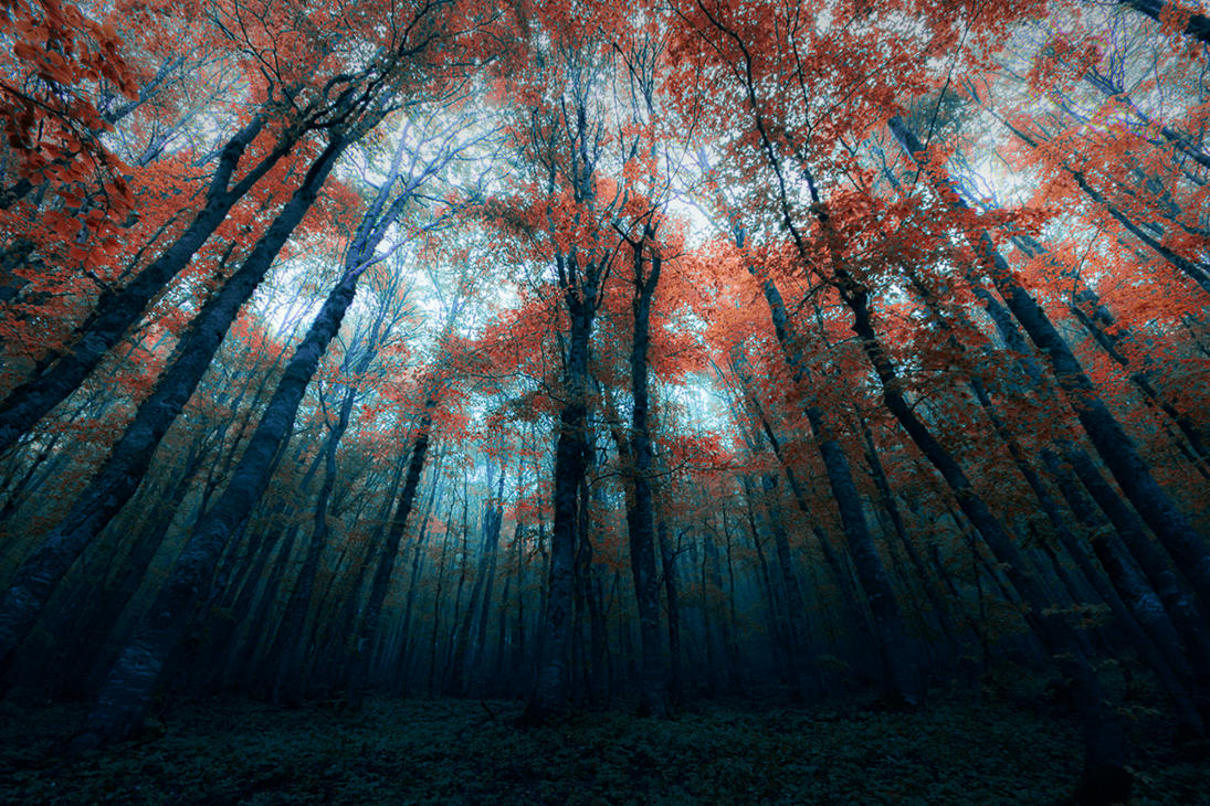 Dark Forest By Bojkovski On DeviantArt