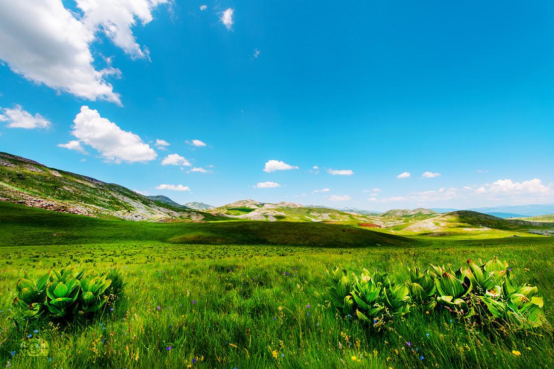 Distant places by Bojkovski