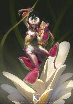 Orchid Mantis Girl
