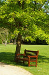 Clivden Bench Under a Tree