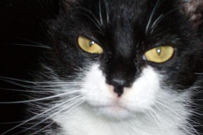 Cyndrome's Profile Picture