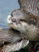 Otter-lurrve by Queenselphie