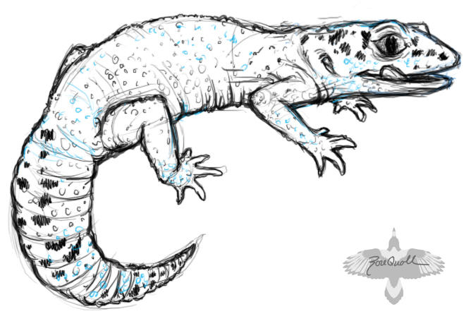 how to draw a leopard gecko easy