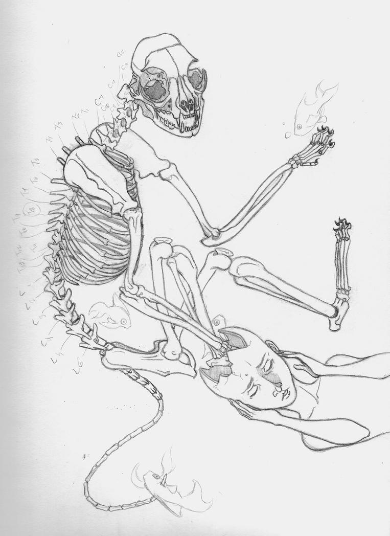 Cat Skeleton Drawing Wip Cat Skeleton Dream Wip by