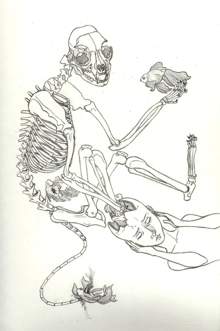 Cat Skeleton Drawing Cat Skeleton Dream Line
