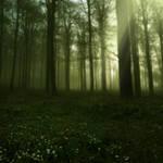 Elven Forest I