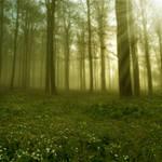 Elven Forest II